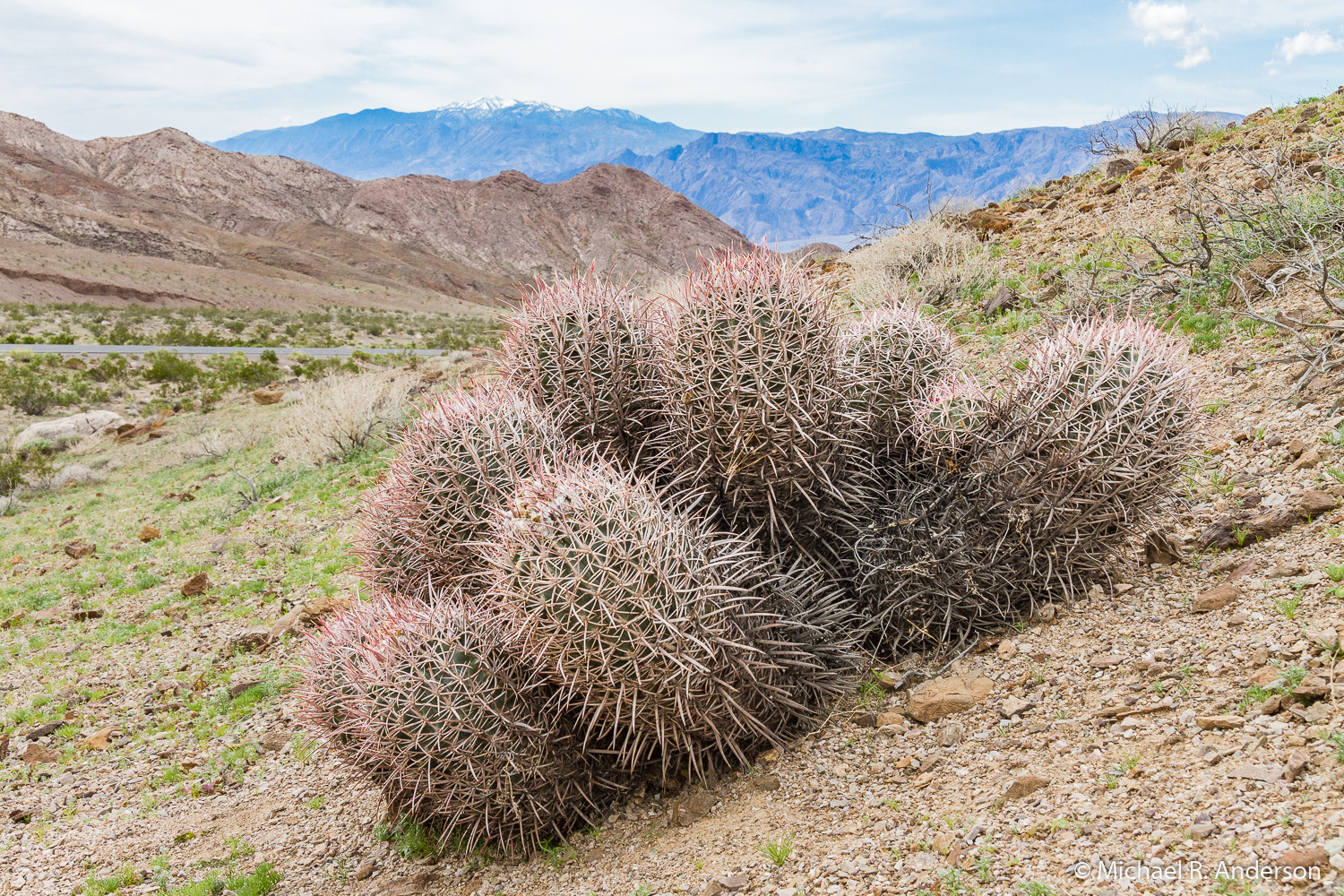 cactus in death valley