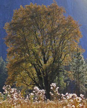 Yosemite-08.jpg